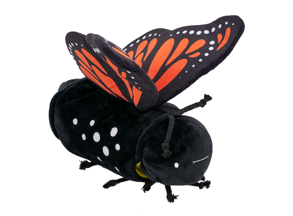 Metamorphosing Butterfly product image